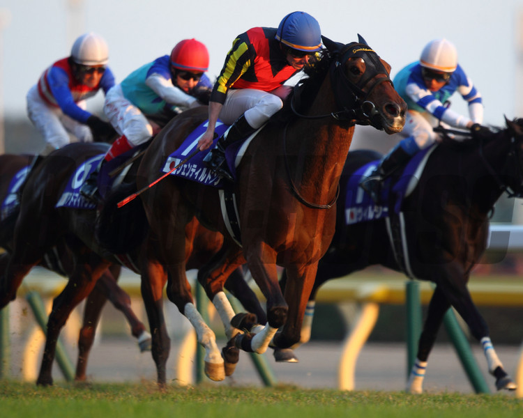 Gentildonna wins the 2013 Japan Cup. <br /> Photo Credit: Masakazu Takahashi