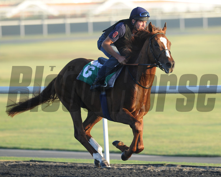 Girolamo, Meydan, March 29th, 2013, photo by Mathea Kelley, Dubai World Cup 2013, Dubai Sheema Classic