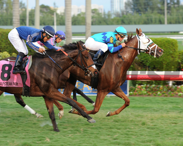 Baffle Me wins the South Beach Stakes.<br /> Coglianese Photos/Leslie Martin