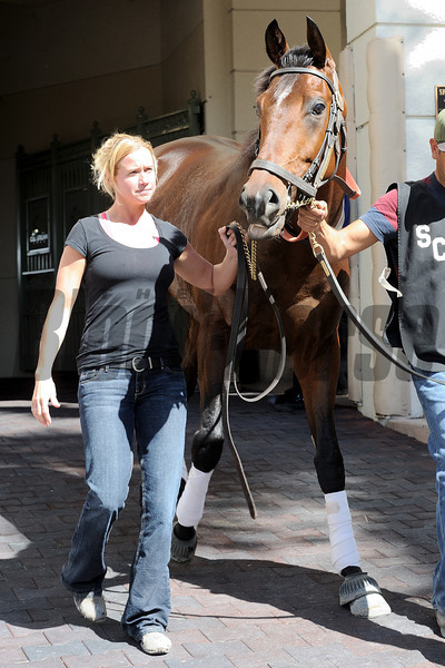 Point of Entry - Gulfstream Park, February 1, 2013<br /> Coglianese Photos