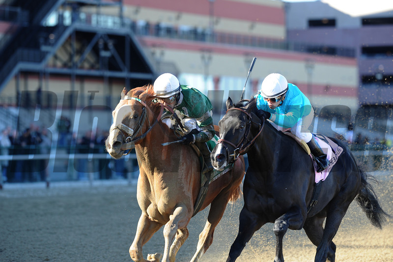 Declan's Warrior wins the 2013 Bay Shore.<br /> Coglianese Photos/Adam Mooshian