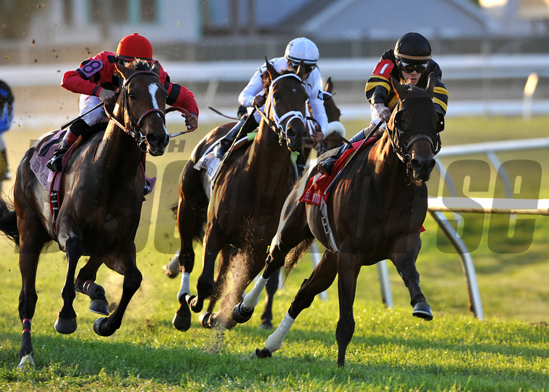 3/30/2013  -  Amira's Prince with Junior Alvarado (black cap) aboard leads the pack into the stretch and goes on to win the 21st running of the Mervin H. Muniz, Jr. Handicap at Fair Grounds.  Hodges Photography / Rick Samuels