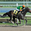 Golden Ticket - Allowance win, January 26, 2013.<br /> Coglianese Photos/Leslie Martin