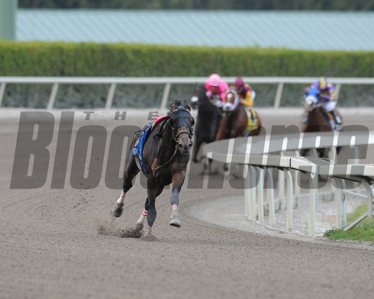 A riderless Fort Larned leads the way in the 2013 Gulfstream Park Handicap. Discreet Dancer was the official winner.<br /> Coglianese Photos/Eleanor Gustason