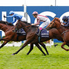 Farhh wins the 2013 Qipco Champion Stakes.<br /> Trevor Jones Photo