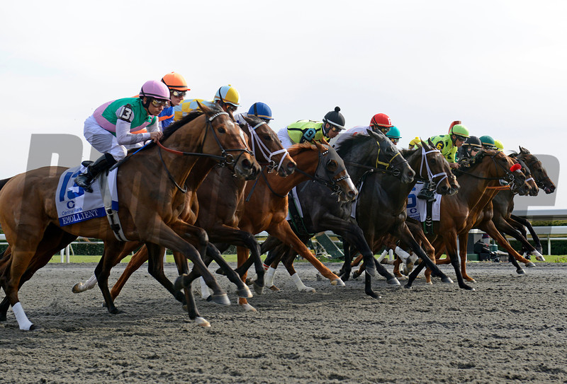 Ashland Stakes field of 13 in their first strides as they break from the gate. Evental winner Emollient #13.<br /> Ashland 2 image 977<br /> Anne M. Eberhardt photo
