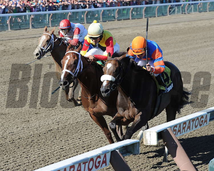 Designer Legs wins the Adirondack Stakes (gr. 2)<br /> Jockey: Shaun Bridgmohan<br /> SARATOGA, Saratoga Springs, NY<br /> Purse: $200,000<br /> Date: August 11, 2013<br /> Class: Grade 2<br /> TV: HRTV/TVG<br /> Age: 2 yo<br /> Race: 9<br /> Distance: Six And One Half Furlongs<br /> Post Time: 5:12 PM<br /> Photo by: Adam Coglianese/NYRA