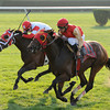 Up With the Birds wins the 2013 Jamaica.<br /> Coglianese Photos/Chelsea Durand