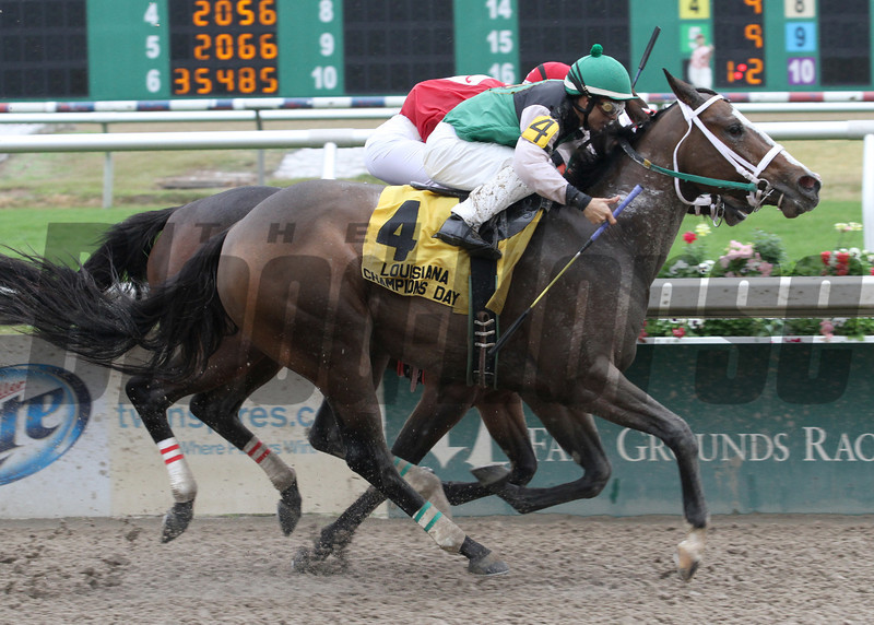 12/14/2013  -  Lexi's Love with Diego Saenz aboard gets a head in front of All Woman and jockey Rosie Napravnik to win thef 23rd running of the$100,00  Louisiana Champions day Lassie at Fair Grounds.  Hodges Photography / Lou Hodges, Jr.