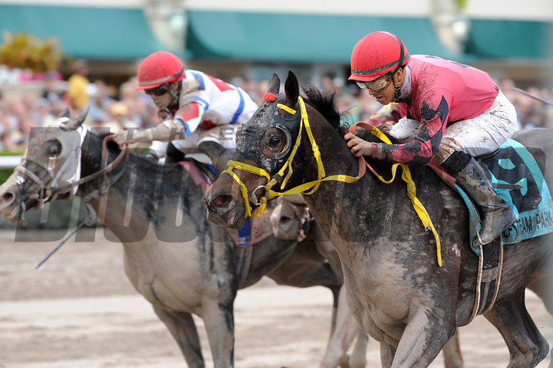 Off the Jak wins the 2013 Sunshine Millions Sprint.<br /> Coglianese Photos