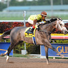 Graydar wins the 2013 Donn Handicap.<br /> Coglianese Photos/Courtney Heeney