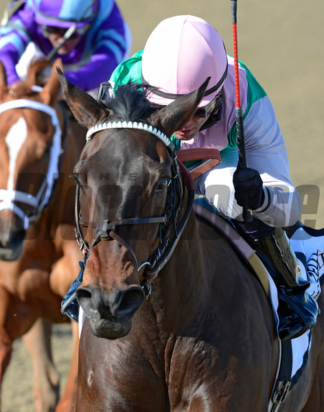 Close Hatches wins the 118th running of The Gazelle at Aqueduct in Ozone Park, N.Y. April 6, 2013.  Photo by Skip Dickstein