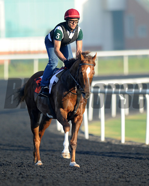 Starspangledbanner; Meydan; March 29th; 2013; photo by Mathea Kelley; Al Quoz Sprint