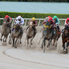 Off the Jak wins the 2013 Sunshine Millions Sprint.<br /> Coglianese Photos/Eleanor Gustafson