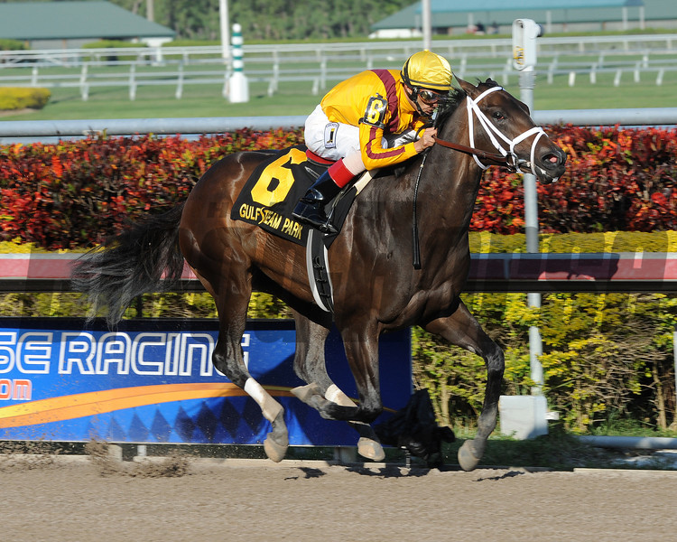 Kauai Katie wins the 2013 Forward Gal.<br /> Coglianese Photos/Courtney Heeney