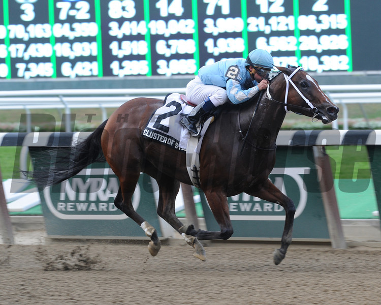 Cluster of Stars wins the 2013 Gallant Bloom.<br /> Coglianese Photos