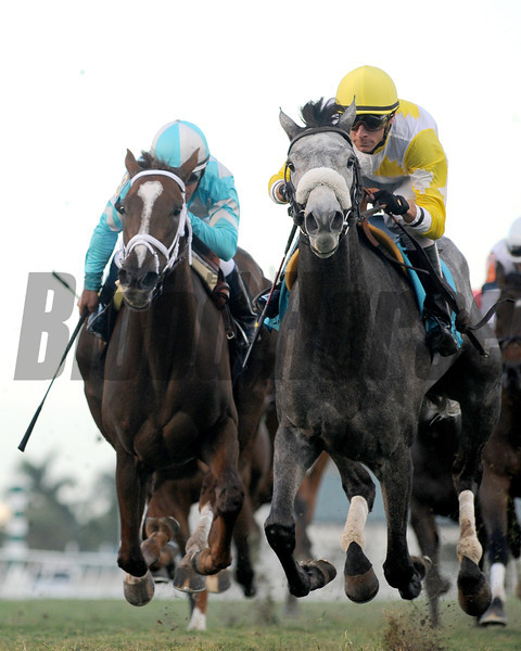 Hard Not to Like wins the 2013 Marshua's River.<br /> Coglianese Photos