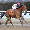 Vyjack wins the 2013 Gotham.<br /> Coglianese Photos