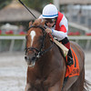Storming Inti wins the 2013 Pulpit Stakes.<br /> Coglianese Photos/Kenny Martin