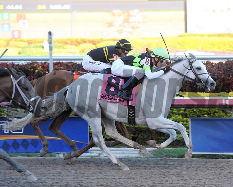 Honorable Dillon wins the 2013 Hutcheson Stakes.<br /> Coglianese Photos