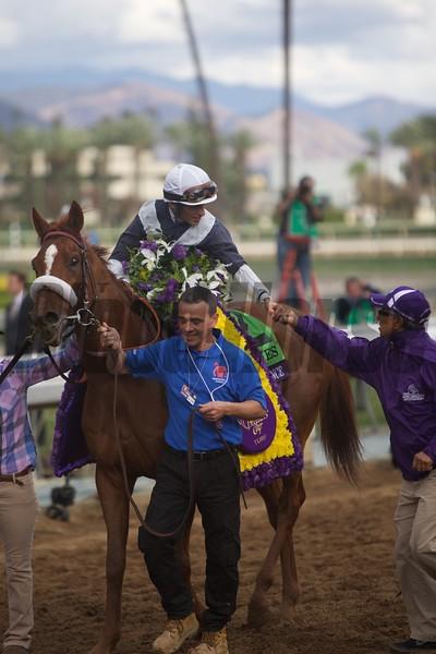 Main Sequence and jockey John Velazquez win the Breeders' Cup Turf at Santa Anita Park on November 1, 2014. Photo By: Crawford Ifland