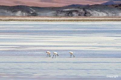 Flamingos_2975
