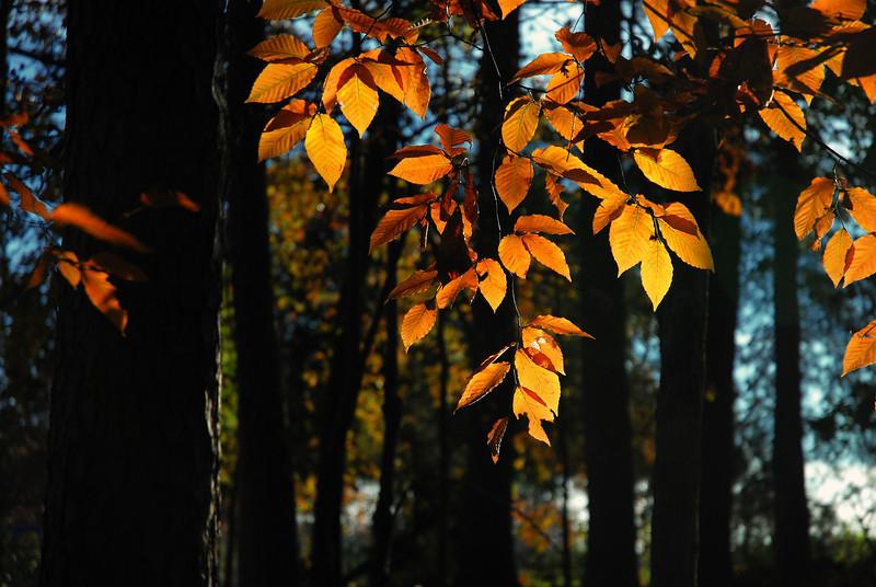 Sandy Creek Park, GA (Clarke County) November 2008