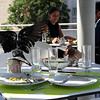 The museum has an outdoor cafe with a pigeon problem...  As soon as someone finishes eating, the pigeons fly in and help themselves to the leftovers.
