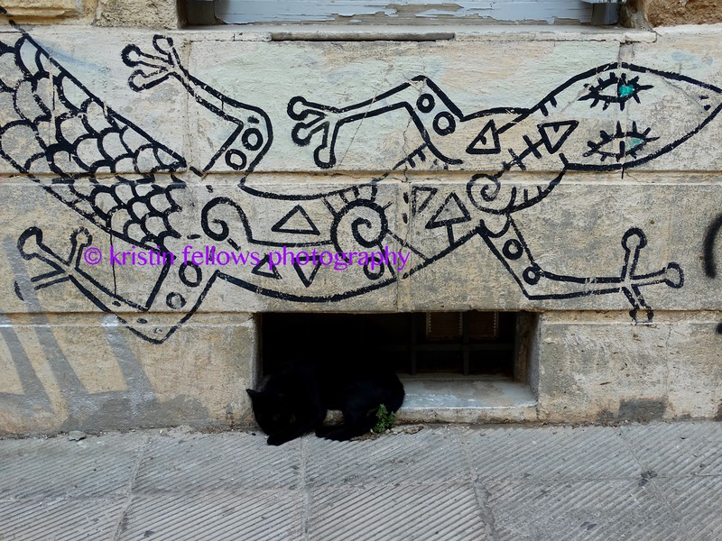 the cat & the salamander
