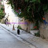 athens in a single shot -- scooter, cat, grafitti, crumbling buildings, litter, beaudacious flowers...