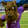 UAlbany's Great Dane mascot, Damien, attends athletic events.