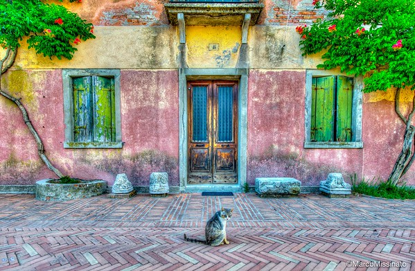 The cat and The House