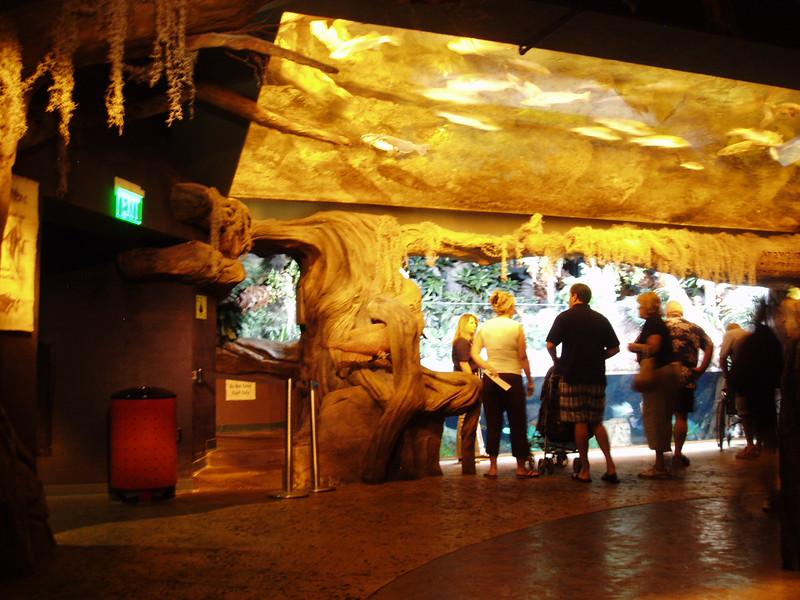 This is the Georgia Aquarium in Atlanta. Very cool place.