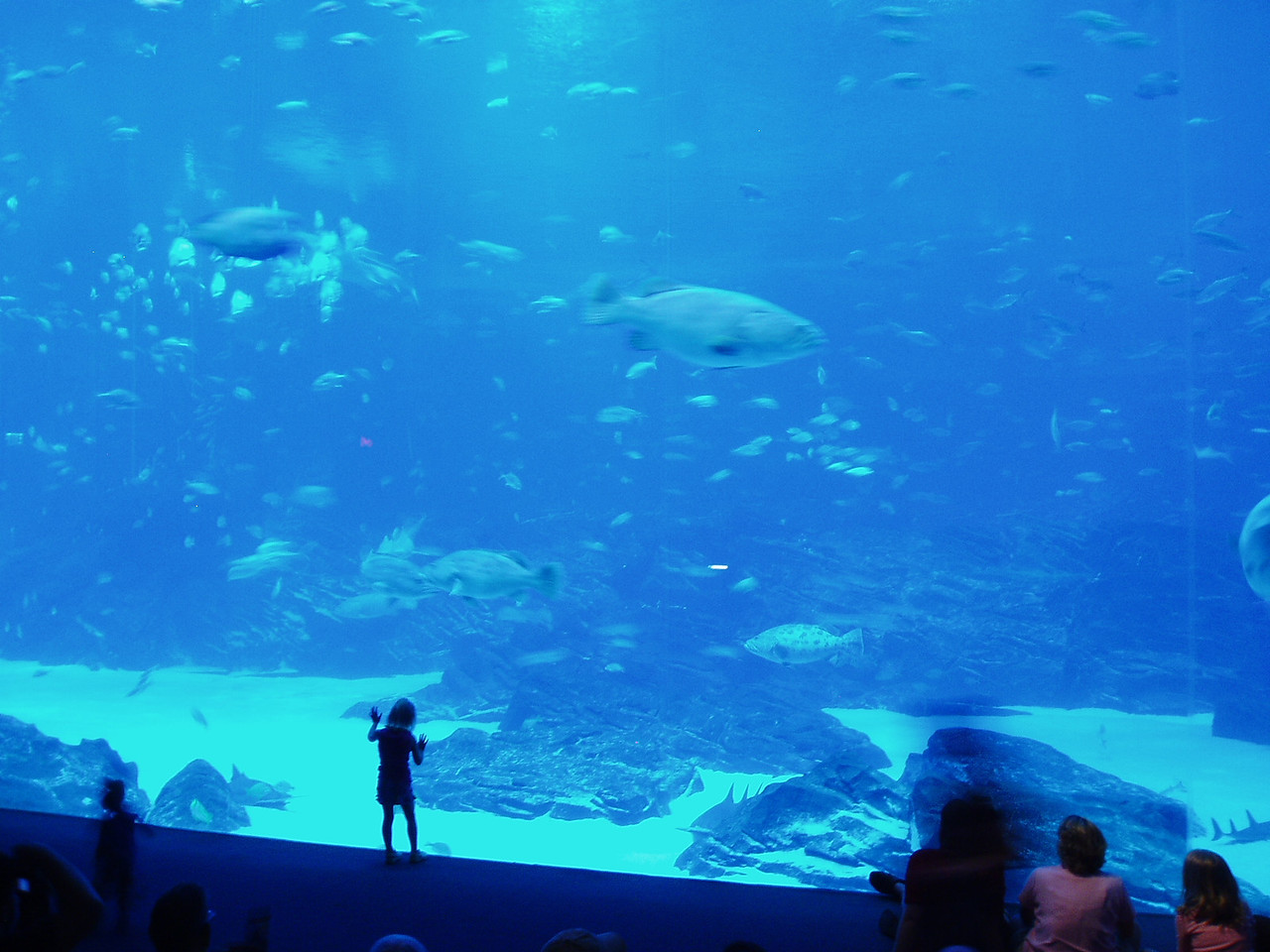 This is the big money-shot at the aquarium. The window is HUGE.