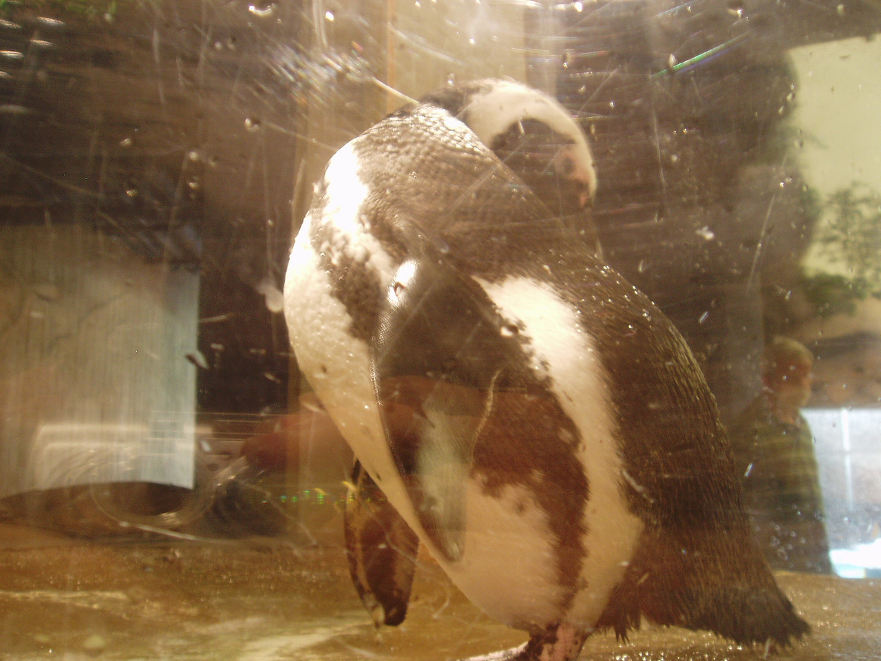 Penguins! You can't tell from this photo but they have a little tunnel you can crawl through and pop up in the actual exhibit inside a small glass bubble.
