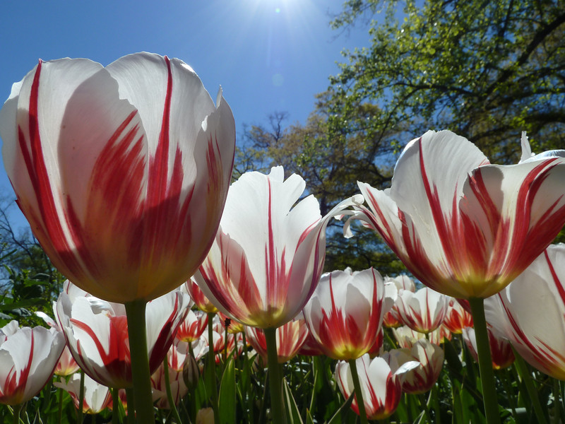 Atlanta Botanical Gardens, Atlanta, GA (Atlanta Outdoor Club)