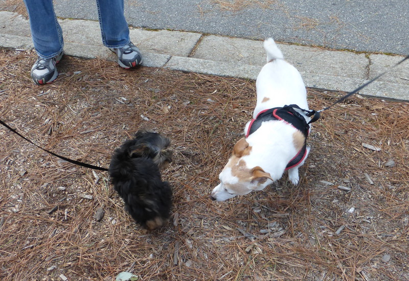 Charlie Meeting Parker