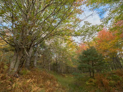Riparian hardwood forest in autumn with ferns St. Mary's River near Glenelg Nova Scotia