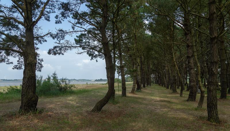 Pine woods, Trehiguier on the River Vilaine