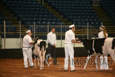 Atlantic Summer Holstein Hfr15
