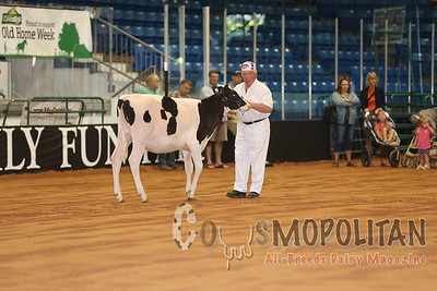 Atlantic Summer Holstein 2016