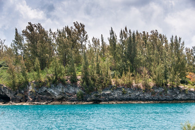 Forest near the beach in St. George's Island, Bermuda