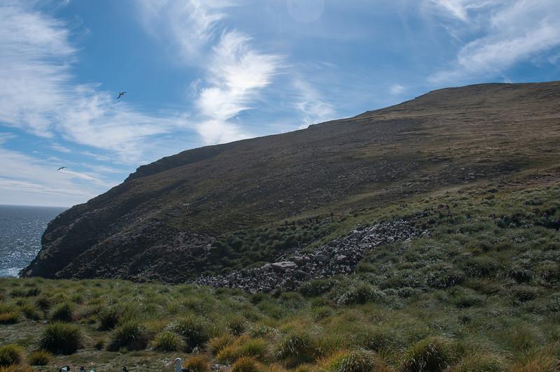 West Point Island, Falkland Islands