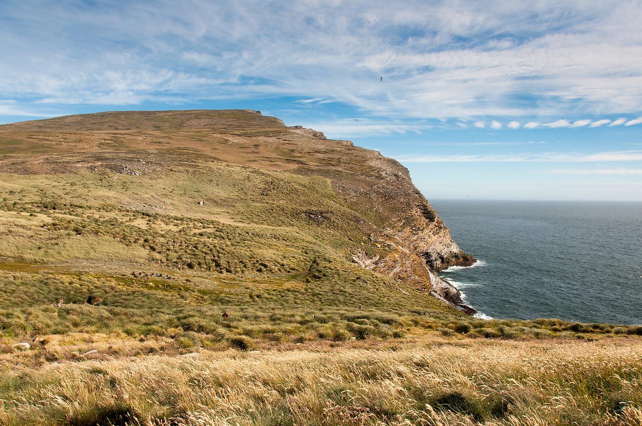 Cliffs in West Point Island, Falkland Islands