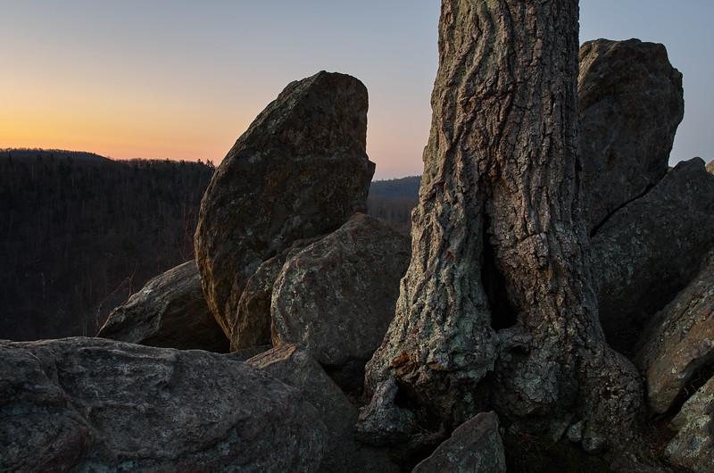 Rocks and Tree, Dawn Llight