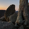 Rocks and Tree, Dawn Llight