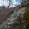Trailside lichen