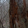 Old bark