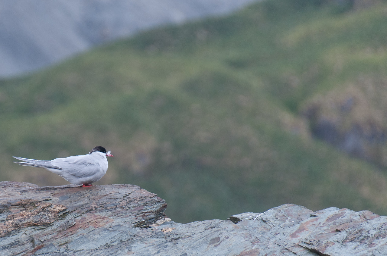 A bird in Cooper Bay, South Georgia Island