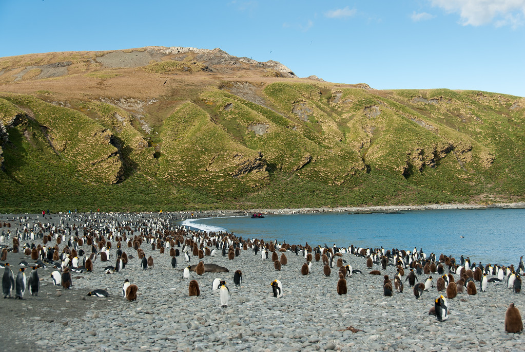 Travel to South Georgia Island